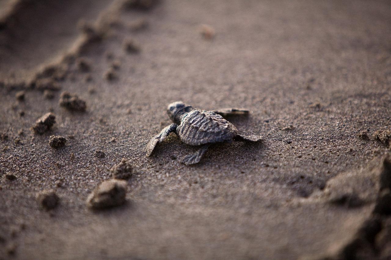 海ガメ 徳島 Tokushima sea-turtle  国道195号線 日和佐 Hiwasa