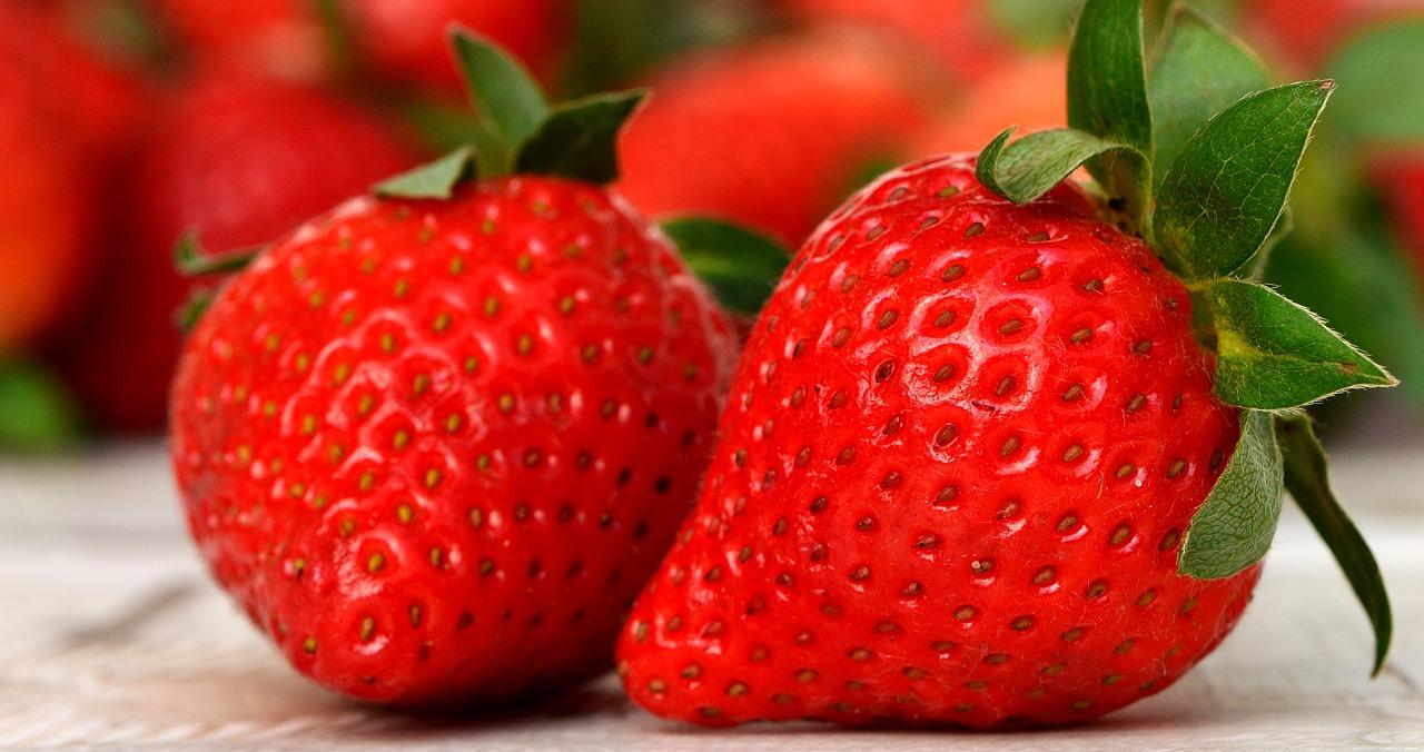 イチゴ 春の作物 高知 とさくら ブログ