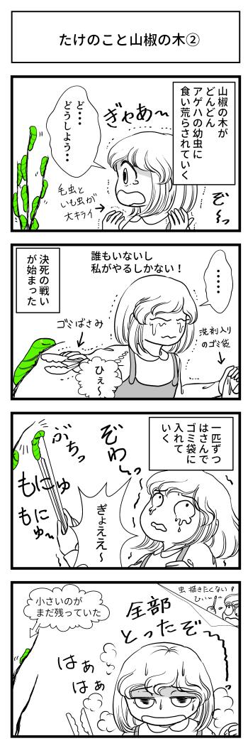 山椒 山椒の木 たけのこ 幼虫 マンガ とさくら 高知 ブログ Tosakura アゲハ蝶 虫